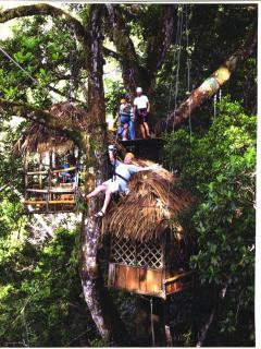 Ziplining through the canopy!