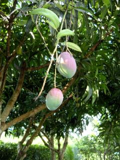 Enjoy our fresh fruits!