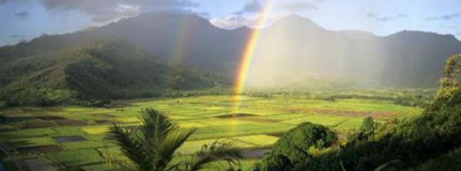 Kauai Hanalei Taro Fields