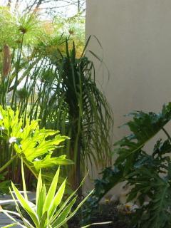 Lush private own garden