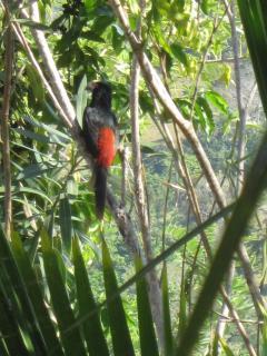 a visiting woodpecker