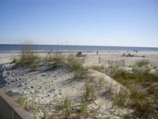beach dunes have turtle nests