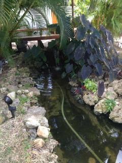 The koi pond