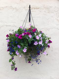 Hanging basket outside the Hayloft Self-Catering Cottage Perthshire