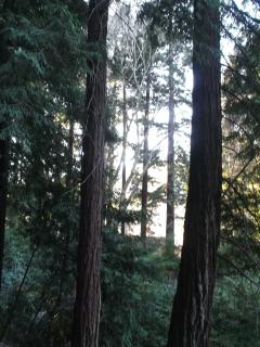 100 Redwoods on Double Lot