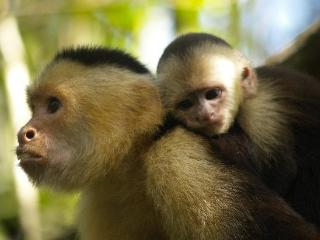Monkey Hut, 2 Bedroom Suite at Casa Manglar Guesthouse, Puerto Jimenez