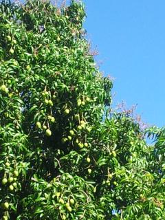 Fruit Trees in the yard