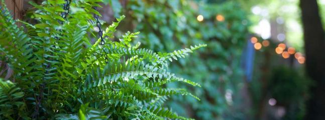 Patio Plant Life
