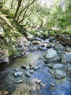 Seasonal creek runs all along the property. Best sound in the world!