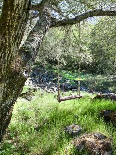 Tree swing overlooking the creek.