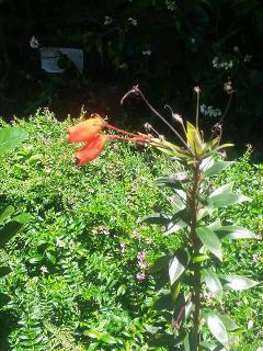 garden wild and disorganised