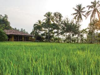 Paddy House, Unawatuna