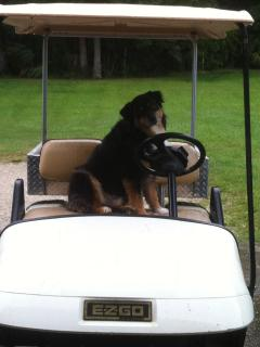 The electric golf cart.  Yours to use on the property.  The dogs love it!
