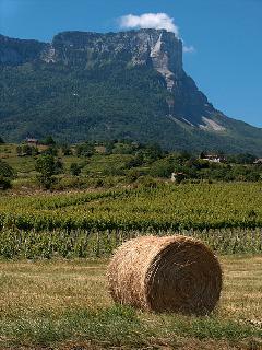 Mont Granier from the Savoie vineyards