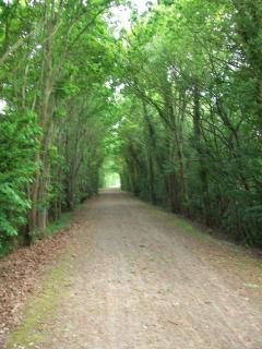 The Green Lane