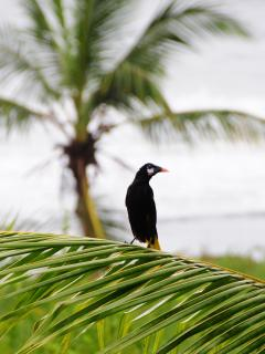 A large variety of tropical birds can be spotted without leaving the property.