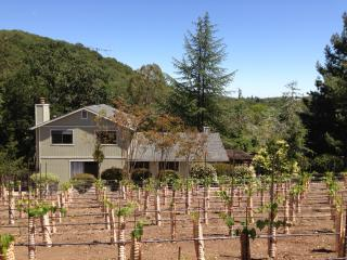 Heart of Sonoma Wine Country, Vineyard & Hot tub, Glen Ellen