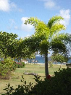 View of the beach and ocean from the back patio