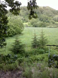 View of field behind tree house