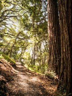 Groomed walking trails through the redwoods, oaks and bays.