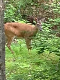 yes  we have deer