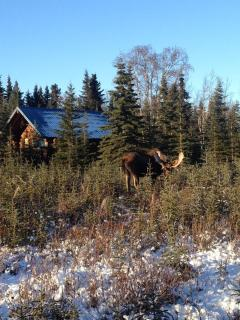 Caribou Crossing Cabins Winter Visitor