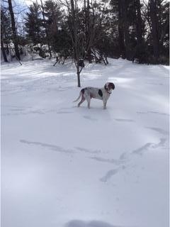 Even my hound likes snow days