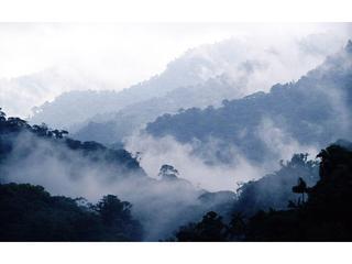 Regenwoud uitzicht vanuit huis verhuur