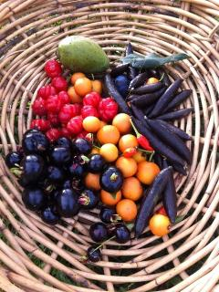 Some of our exotic tropical fruit