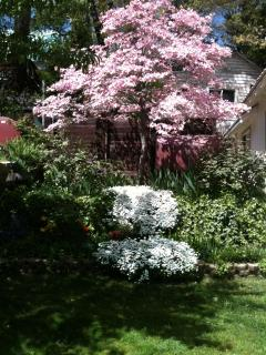 Spring in the side yard is entrancing