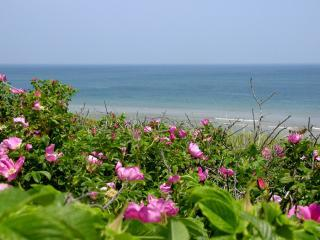 THE BEAUTY OF THE SPECTACULAR CAPE COD NATIONAL SEASHORE