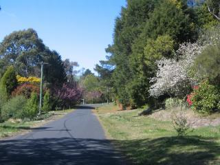Carrington Avenue in Spring