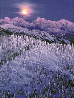 Ski Whitefish Mountain Resort with Glacier Park views, snow ghosts, tree skiing & more!