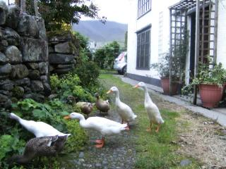 Rebecca PuddleDuck Cottage,village farm nr Keswick
