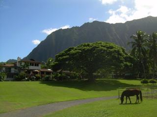 Open Palm Plantation A Slice of Heaven in Paradise, Waimanalo