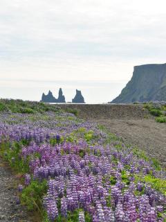 Iceland Vík