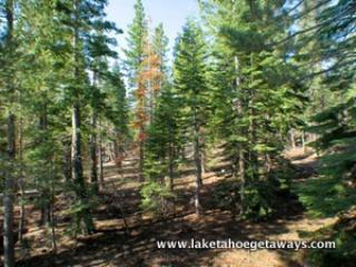 Backs National Forest!