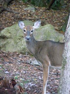 Deer in Arrowhead Lake