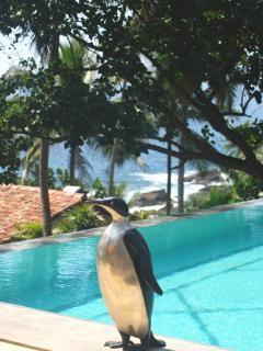The Penguin by the pool