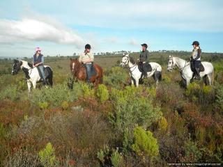 Horse riding in the 5000 ha fynbos flowers
