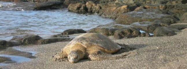 Turtle Sunbathing on Kahalu'u Beach