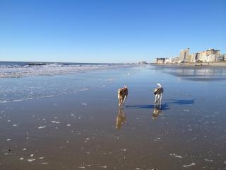 Ocean Pups - Pet Friendly Beach House