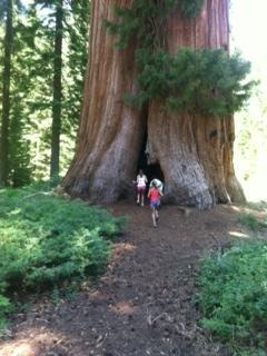 Balch Park Giant Sequoia 1 hour away