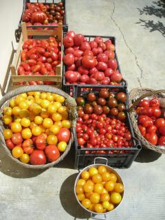 Tomatoes of many varieties - for salads, sauces and so many great Italian dishes we offer guests