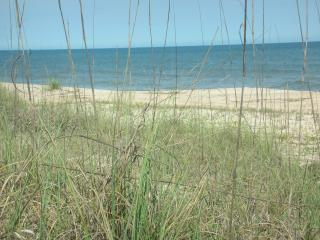 Sea Oats oceanside