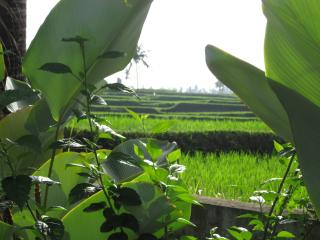 Next to Rice Field