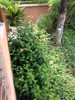 Gardens next to the garage