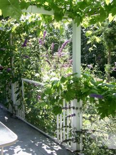 grape vines on balcony