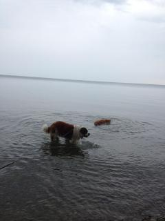 dogs getting a drink