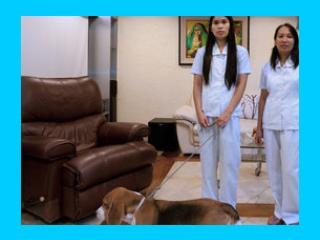 personeel (marly en rowena) en onze beagle (Sam)